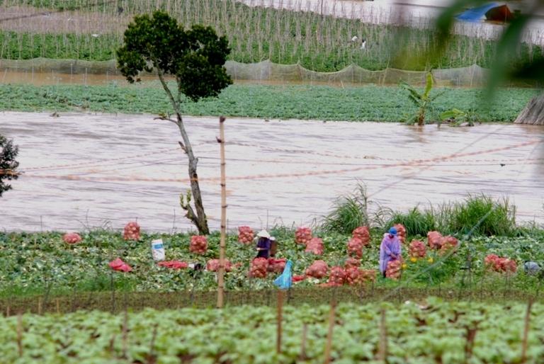 Chủ động thu hoạch hoa màu