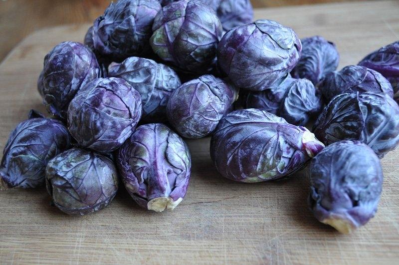 Giống bắp cải tí hon màu tím nhập khẩu với màu sắc thu hút.