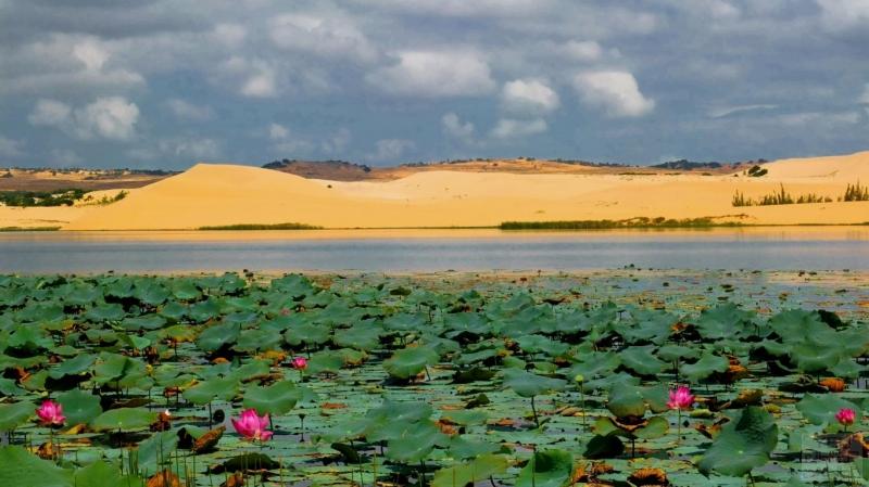 Hồ sen giữa rừng sa mạc