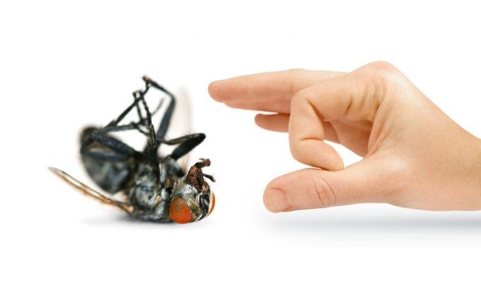 Bẫy ruồi và côn trùng tác dụng