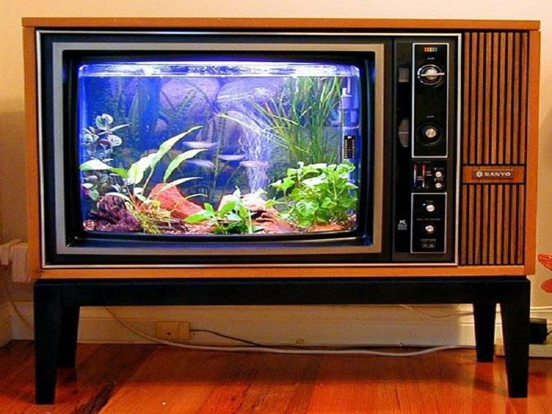 Bể cá tivi cực độc, cực lạ
