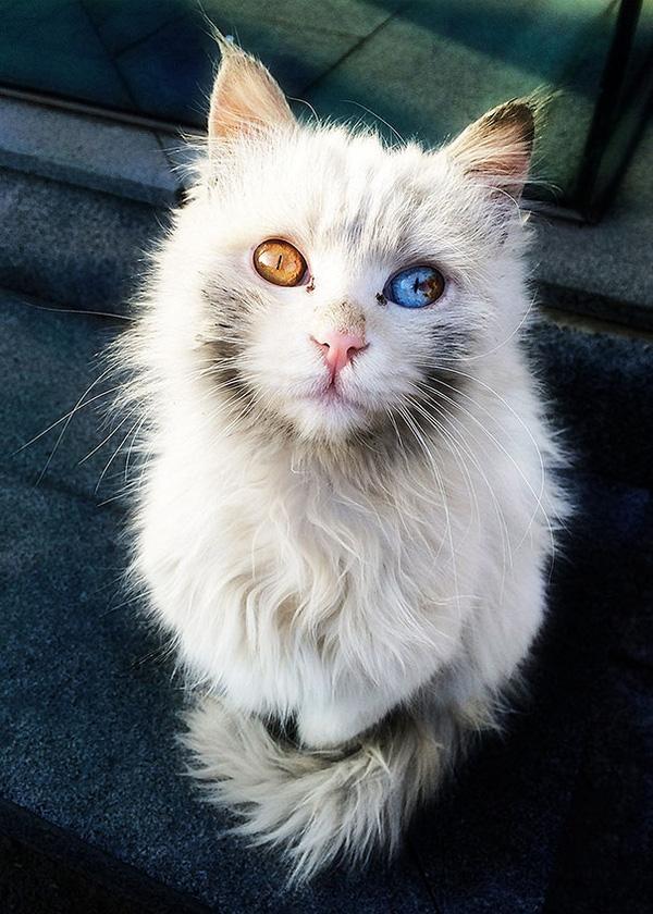 Chú mèo giấu cả vũ trụ trong đôi mắt