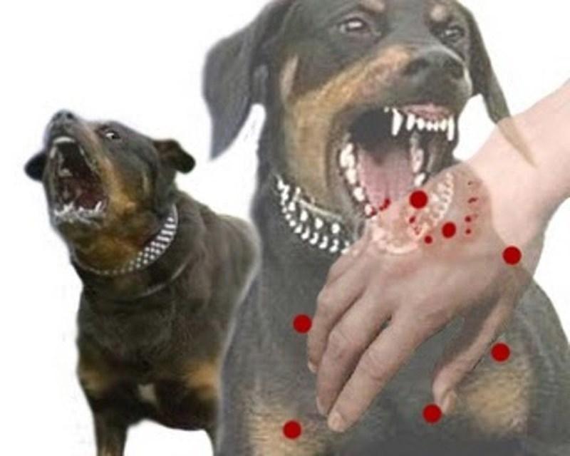 Bệnh dại là bệnh nguy hiểm nhất ở chó, mèo
