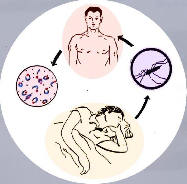 Bệnh sốt rét – dịch bệnh trên thế giới