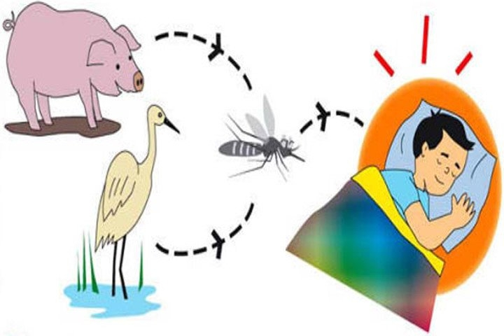 Nhóm động vật gây bệnh viêm não Nhật Bản