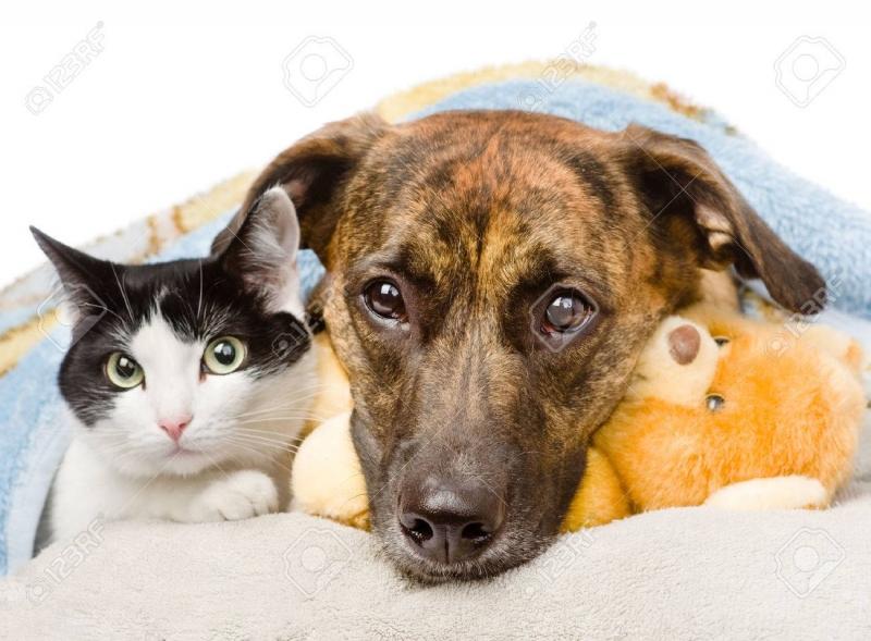 Giữ ấm cho chó mèo là một trong những nguyên tắc phòng chống bệnh viêm phổi