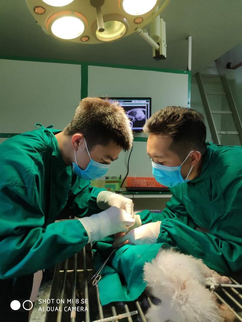 Bệnh viện thú y funpet Hải Phòng