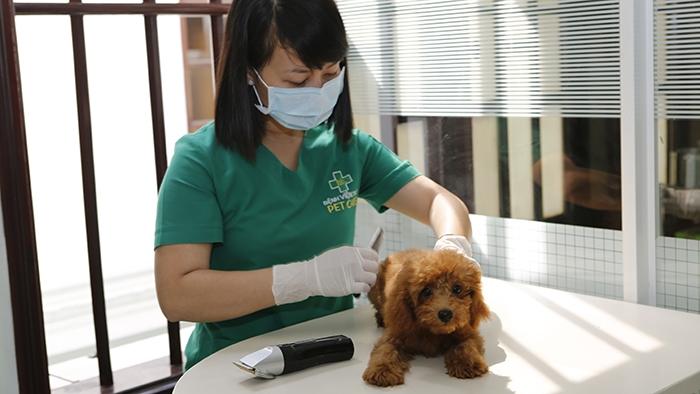 Bệnh viện thú y PetCare là địa chỉ tin cậy để bạn đưa thú cưng đến thăm khám, chẩn đoán bệnh