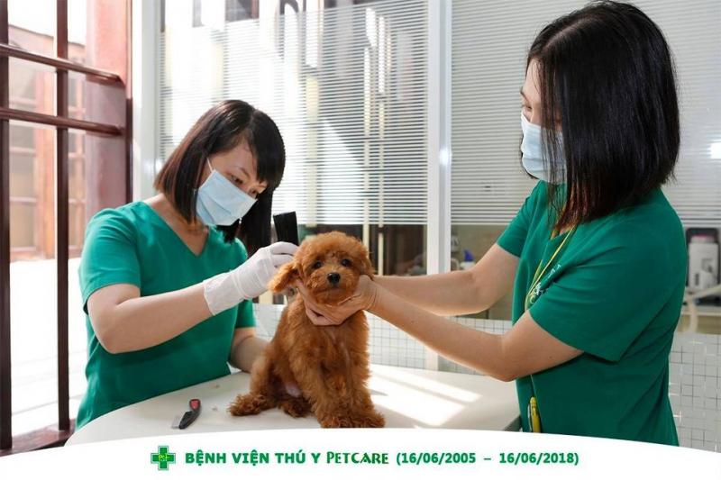 Bệnh viện Thú Y Petcare