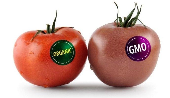 Cà chua GMO giúp tăng khả năng bảo quản thời gian chín (Nguồn: tinmoi.vn)