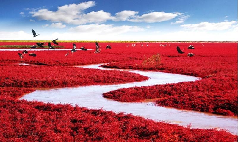 Sở dĩ biển Đỏ trở thành địa điểm giống như ở ngoài hành tinh là bởi những loài thực vật màu đỏ rực rỡ mọc hai bên bờ.