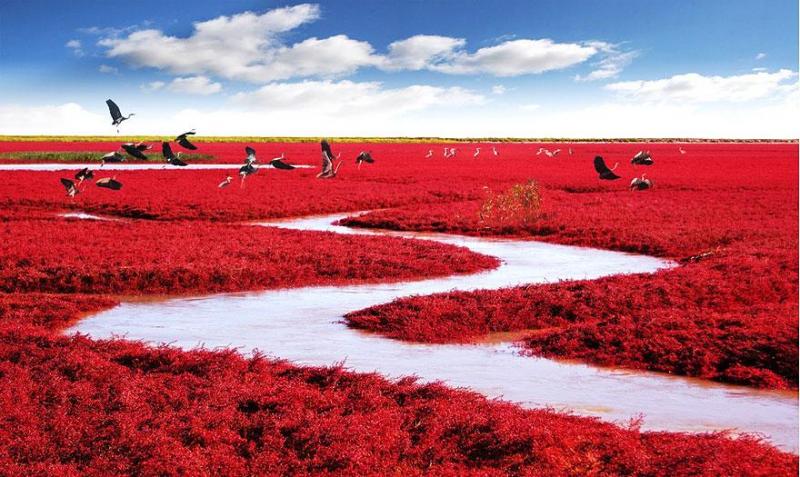 Màu đỏ rực rỡ dễ dàng nhận thấy
