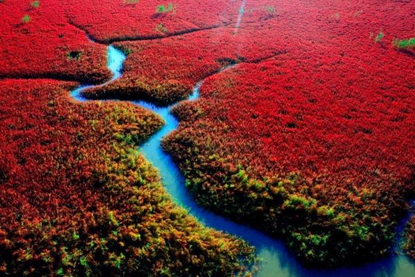 Sở dĩ biển Đỏ trở thành địa điểm giống như ở ngoài hành tinh là bởi những loài thực vật màu đỏ rực rỡ mọc hai bên bờ