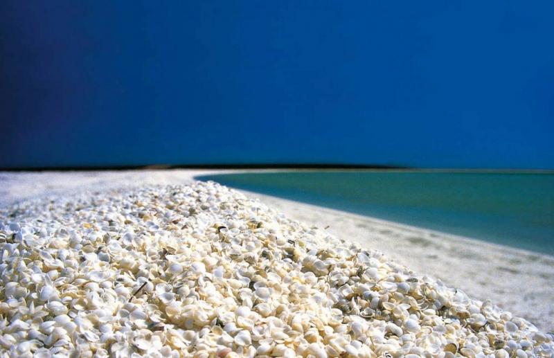 Bãi biển nằm ở phía Đông Bắc thành phố Denham thuộc miền Tây nước Úc là một trong những điểm đến hút khách du lịch vào mùa hè.