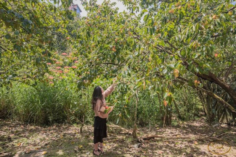Biệt thự Hồng Môn Đà Lạt - Anthurium Villa Dalat