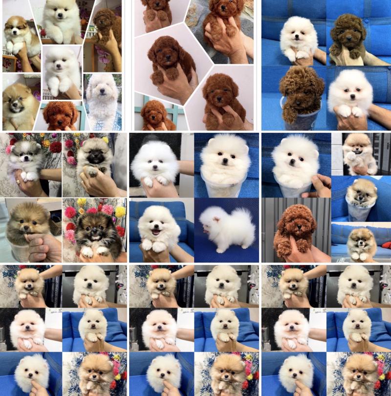 Bin Bon Dog Shop