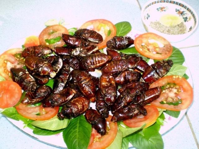 Món ăn từ bọ hung