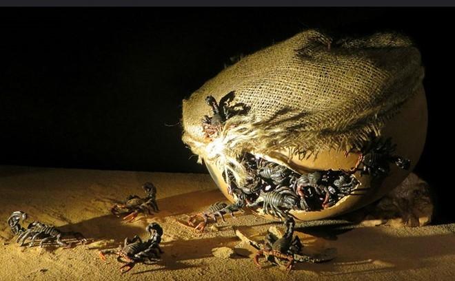 Bom bọ cạp