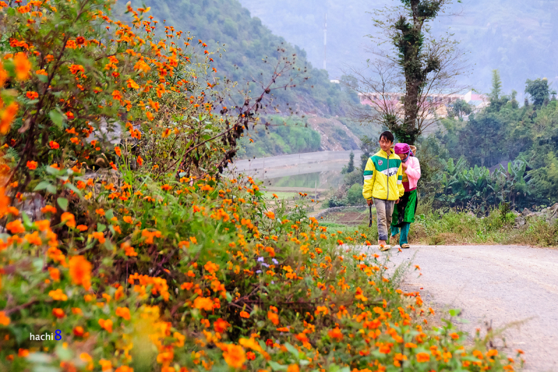 Hoa nở rực rỡ 2 bên đường Hạnh Phúc