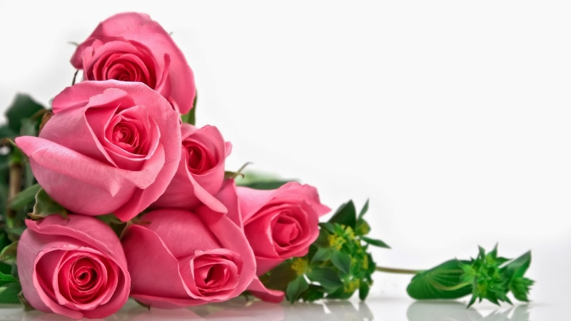 Những đóa hồng đi vào thơ ca