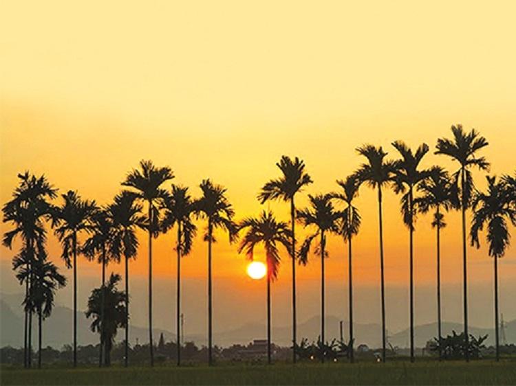 Hàng cau trước nhà mảnh dẻ đang vươn cánh tay dài rộng để hứng những tia nắng sớm đầu tiên.