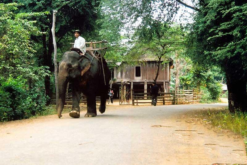 Khi nhắc đến địa danh Buôn Đôn thì ắt hẳn ta không thể không kể đến truyền thống thuần dưỡng và săn bắt voi rừng ở nơi đây