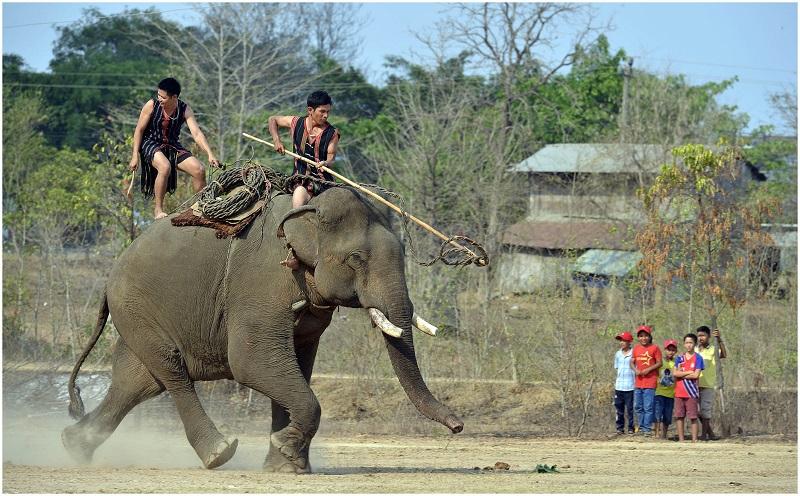 Unique Buon Don elephant festival
