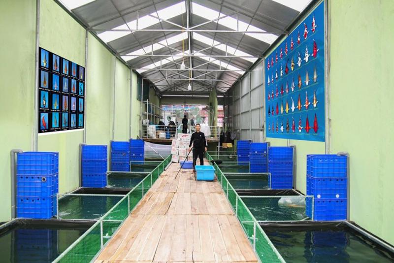 Cá cảnh Thái Hòa