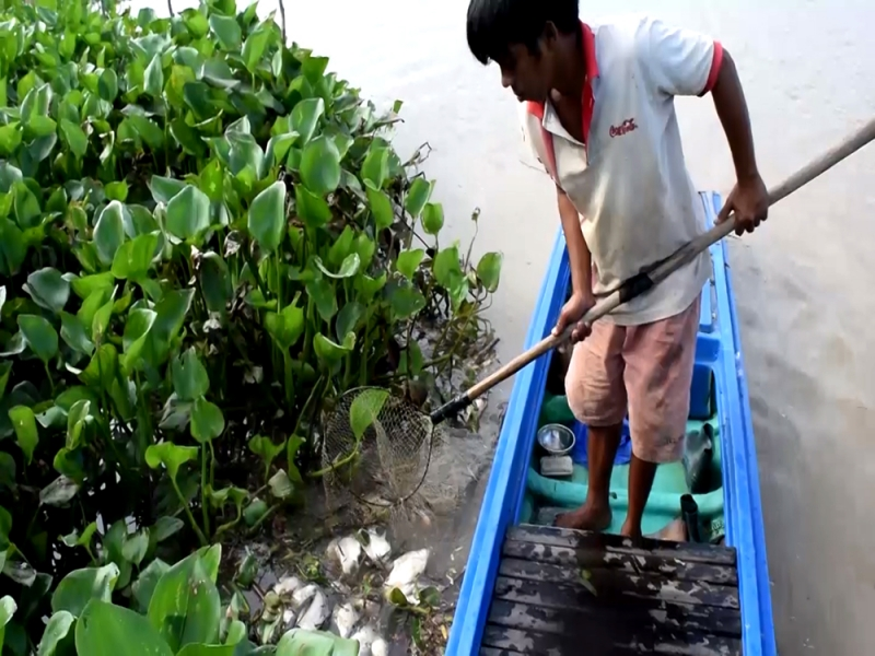 Cá chết hàng loạt ở thượng nguồn sông Sài Gòn 20/07/2016
