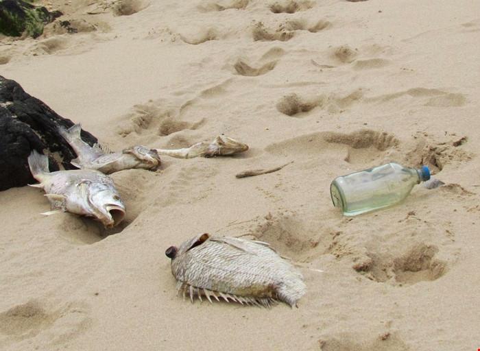 Cá chết hàng loạt ở ven biển 4 tỉnh miền Trung, ngày 6/4/2016