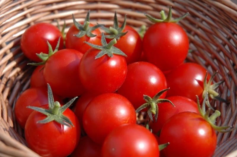 Cà chua