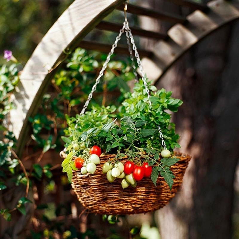 Cà chua bi cung cấp nhiều vitamin cho cơ thể