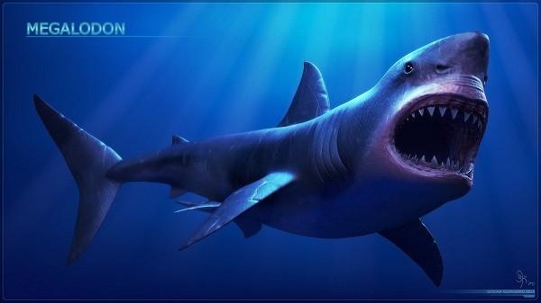 Cá mập khổng lồ có cú đớp kinh hoàng nhất