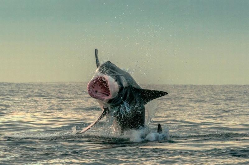 Cá mập miệng rộng