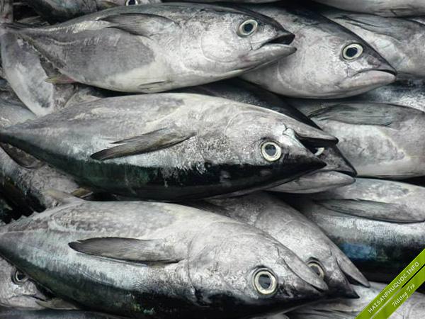 Cá ngừ thực sự là một trợ thủ đắc lực trong việc giảm cân