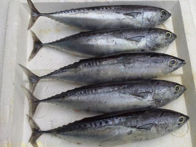 Mỗi miếng phi - lê cá ngừ có đến 26g protein