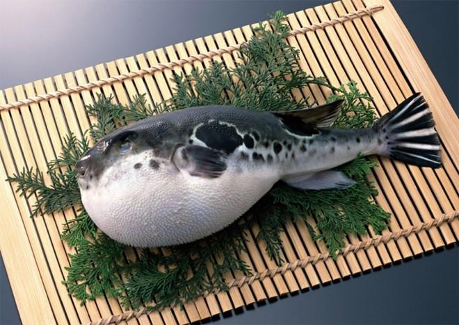 Cá nóc sống (Nhật Bản)