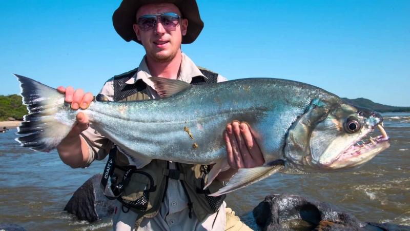 Cá Payara (cá ma cà rồng)