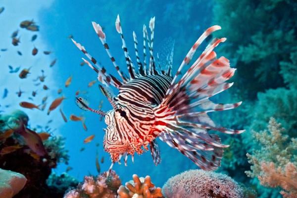 Top 8 loài cá có bề ngoài kì dị nhất hành tinh