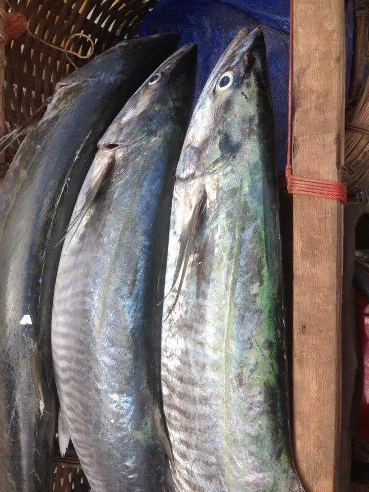 Hình ảnh loài cá thu