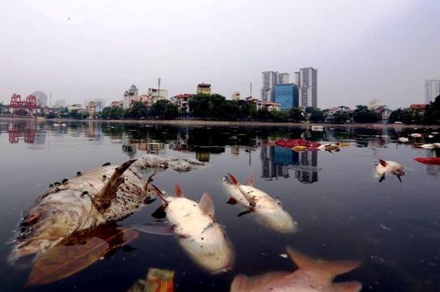 Cá to chết hàng loạt ở hồ Hoàng Cầu (Hà Nội) ngày 8/6/2016