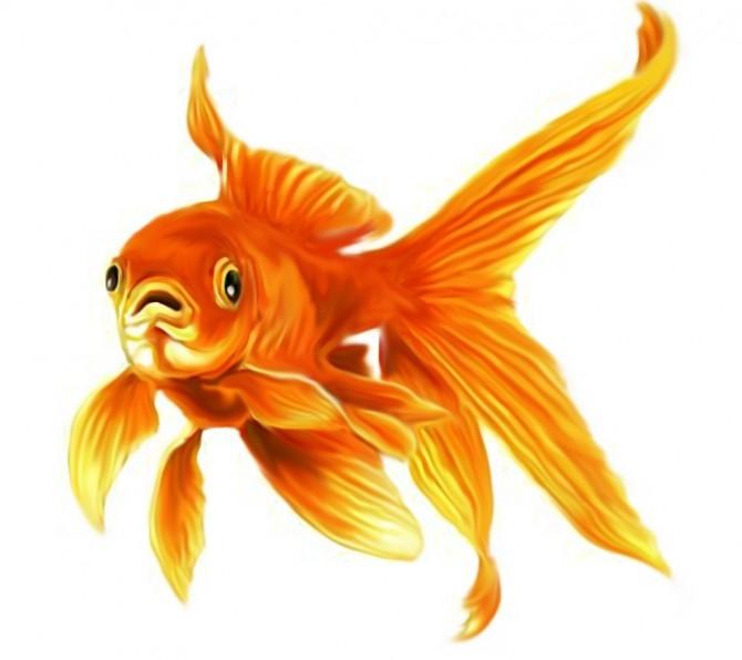 Tranh: cá vàng