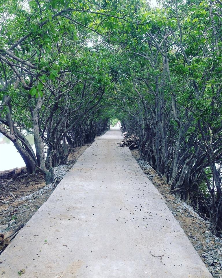 Hình ảnh phía trong rừng Rú Chá
