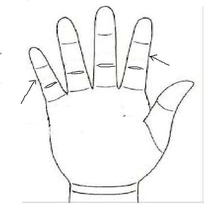Các đốt giữa ngón tay đều dài