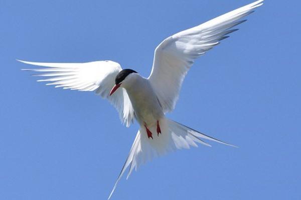 Các loài chim
