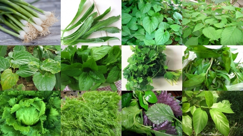 Các loại rau xanh: