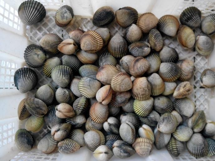 Các loại sò rất dễ gây dị ứng