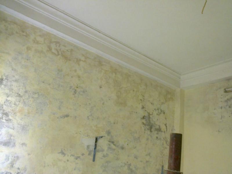 Cách loại bỏ nấm mốc trên tường nhà