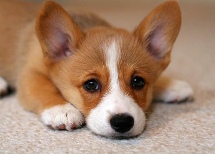 Top 7 cách trị ve (bọ chét) hiệu quả cho cún yêu nhà bạn