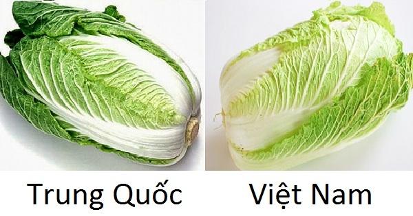 Sự khác nhau về màu sắc của hai loại cải